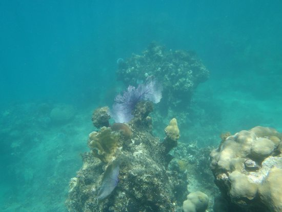 Round Hill Hotel & Villas : Corral reef at the resort