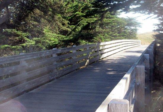 Golf Cart Path, Half Moon Bay Golf Links, Half Moon Bay, Ca