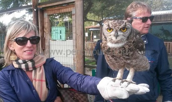 Percy Tours Day Tours: Owl and Eagle park near Hermanus / Cape Town
