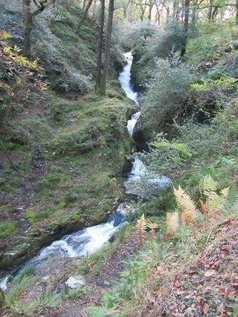 Derrymore House : Wandeling in het natuurgebied