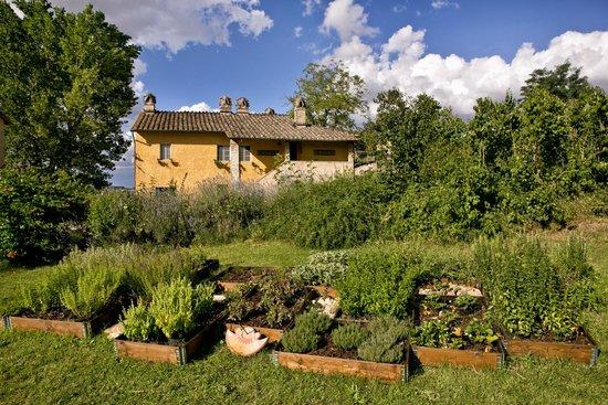 Fattoria dei Comignoli: area verde con primo piano aromatiche e officinali