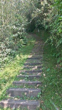 Eryan Ping Trail