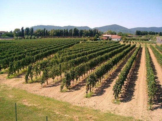 Azienda Vinicola Baia Del Sole - Federici