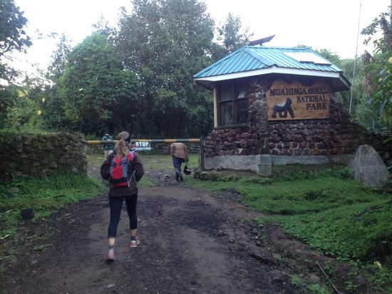 Amajambere Iwacu Community Camp: The main gate to Mgahinga Gorilla National Park is 40 meters away.