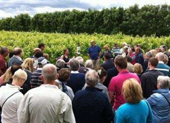 Hartest, UK: Tours of the Vineyard