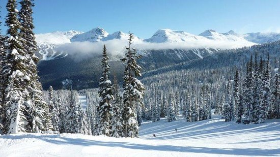Supreme Ski & Snowboard School