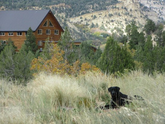 XbarH Lodge: Pet Friendly Location