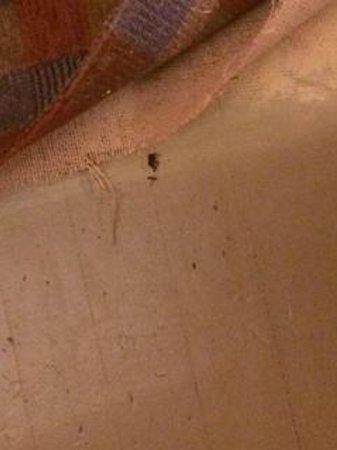 The Porches Inn at MASS MoCA: disgusting floors