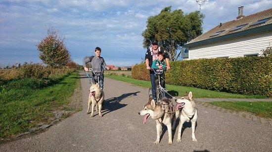 Husky Safari - Day Tours: Een husky trekt +/-5 keer zijn gewicht en weegt tussen de 17-25kg dus kom je samen boven de 100