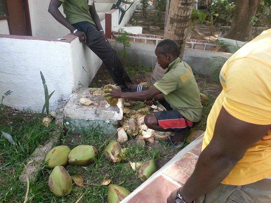 Badala Park: fresh coconut