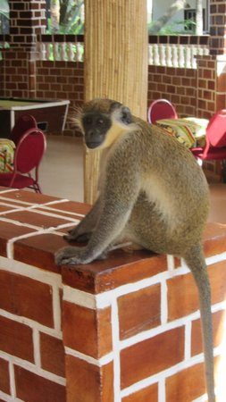 Badala Park: regular visitor