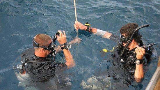 Scuba Junction Diving Co. Ltd: Steve the gordie & me!