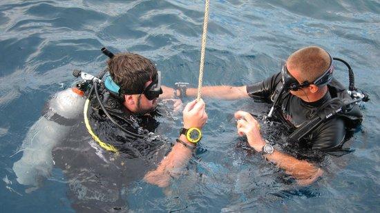Scuba Junction Diving Co. Ltd: Swifty(aka trout) & Steve the gordie!