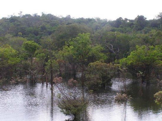 Amazon Rainforest: SCENARY