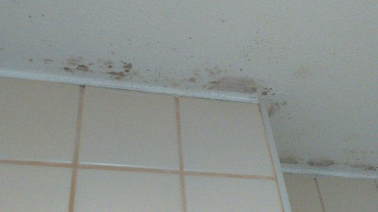 Green Mar Apartments: Mould in bathroom