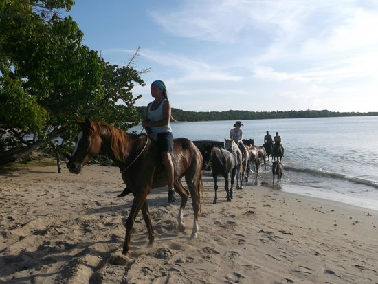 Being with Horses: The ride returning from the beach