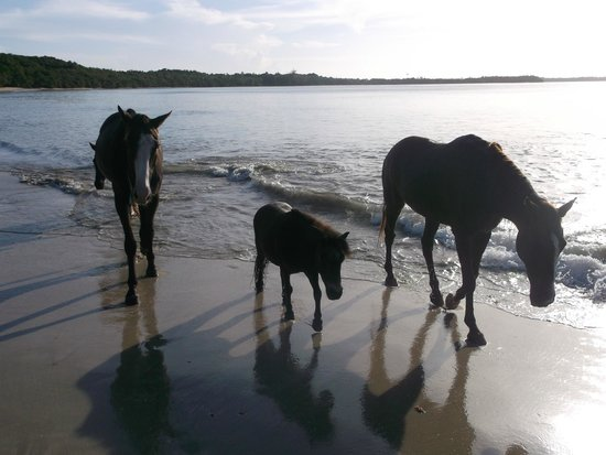 Being with Horses: On the beach