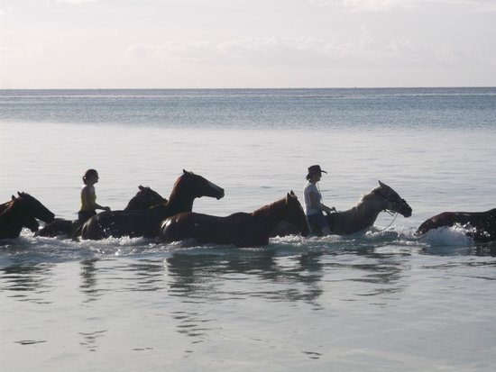Being with Horses: Swimming in the sea