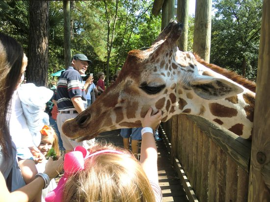Riverbanks Zoo and Botanical Garden : Feed the giraffes
