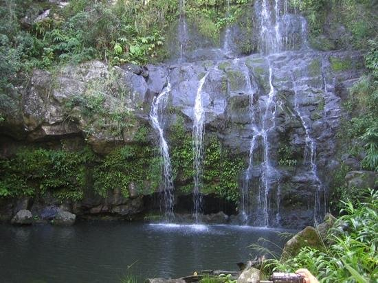 Kohala Waterfalls Adventure: One of several waterfalls on the hike.