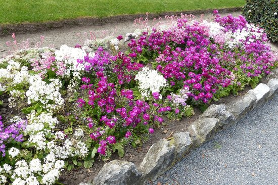 North Island, New Zealand: Spring flowers in Hawkes Bay