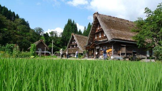 Suganuma Gassho Community: 夏の香