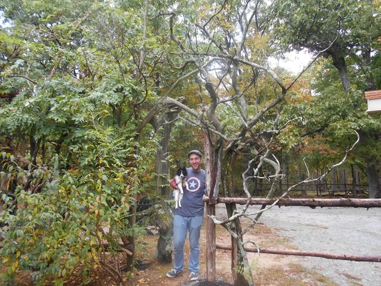 Rim Rock's Dogwood Cabins: Grounds - Love The Tree Archway