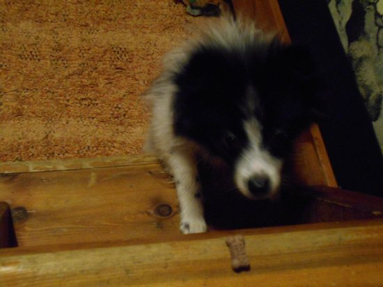 Rim Rock's Dogwood Cabins: Our Dog, Mervin, trying to get a treat from the loft ladder :-)