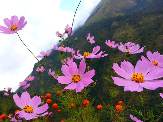 Himalayan Abode Travels and Tours Treks and Expeditions - Private Kathmandu Day Tour: 格桑花