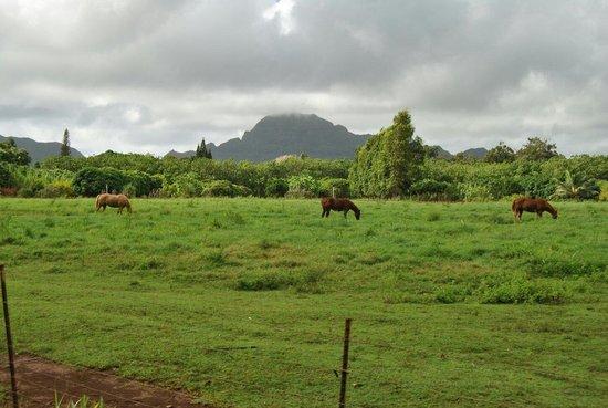 Kauai Plantation Railway: Horse family