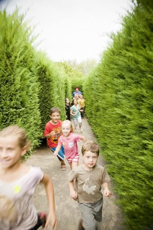 Hedgend Maze: let your kids off all that energy!