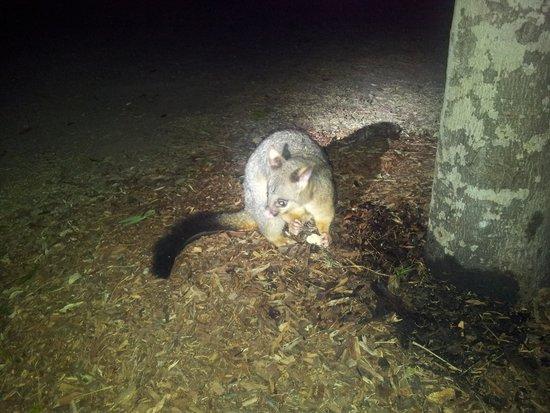 Lake Somerset Holiday Park: Wildlife