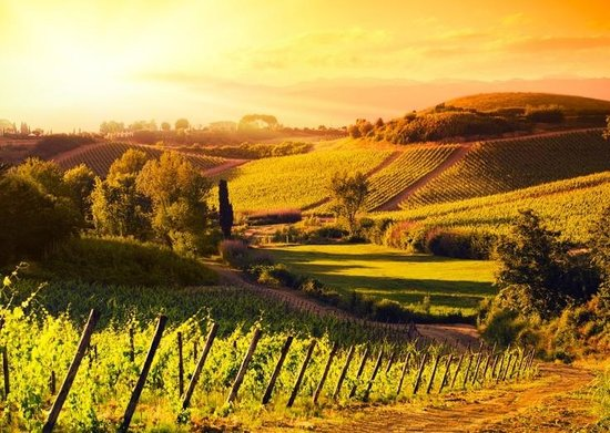 Sunny Tuscany & Italy - Day Tours