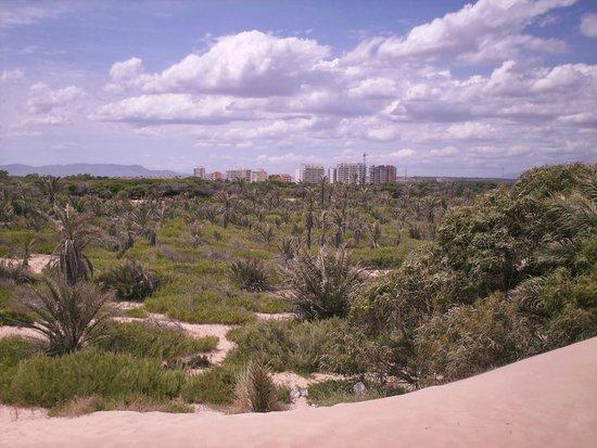 Playa de Guardamar: Widok z wydm