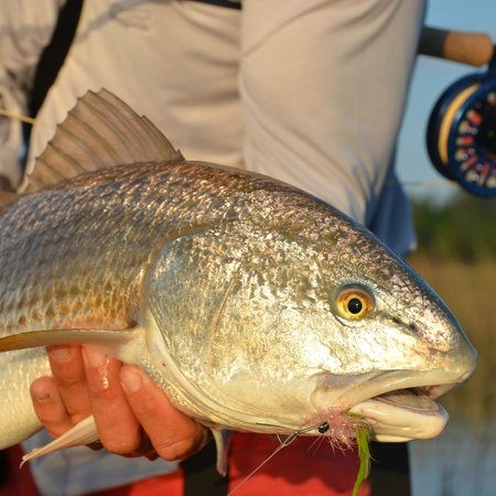 Off the hook fishing charters off the hook for Off the hook fishing charters