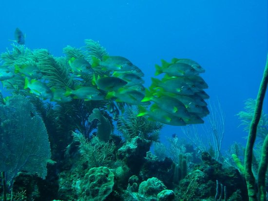 View from the dive shop picture of cobalt coast grand for Fishing grand cayman