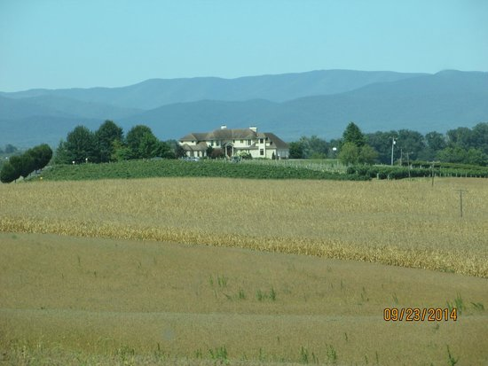 Bluestone Vineyard : beautiful setting at the foot of the Blue Ridge Mountains