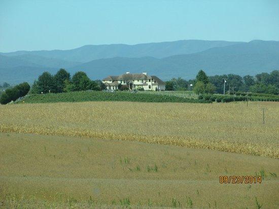 Bluestone Vineyard: beautiful setting at the foot of the Blue Ridge Mountains