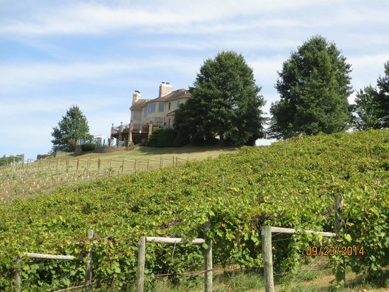 Bluestone Vineyard: rear patio area overlooking the vineyards and the mountains