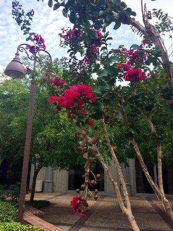 The Woodlands Resort: такая красота в сентябре