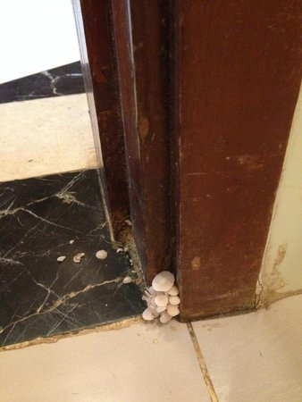 Sinquerim, India: Mushrooms - bathroom door