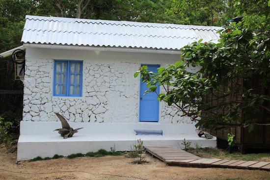 Coralina Island : la habitación