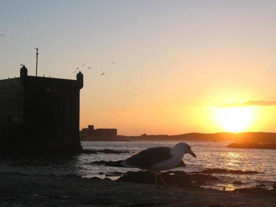 Dar Liouba: Soirée sur le port