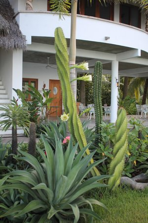 Bungalows Lydia: Our gorgeous garden