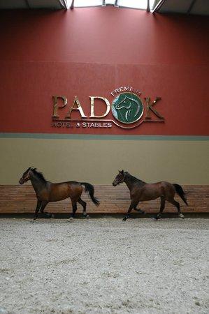 Padok Premium Hotel & Stables: kaplı at biniş yeri
