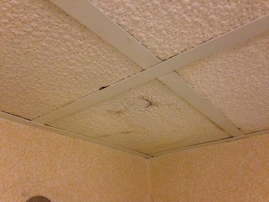 Quality Hotel & Suites At the Falls: mold
