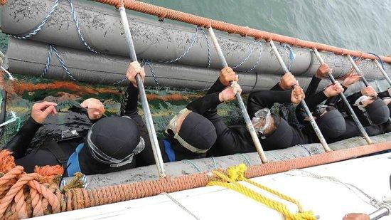 Shark Diving Unlimited: Mergulho