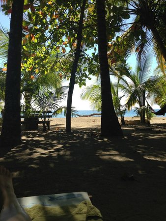 Fenix Hotel - On The Beach: view from the hammock