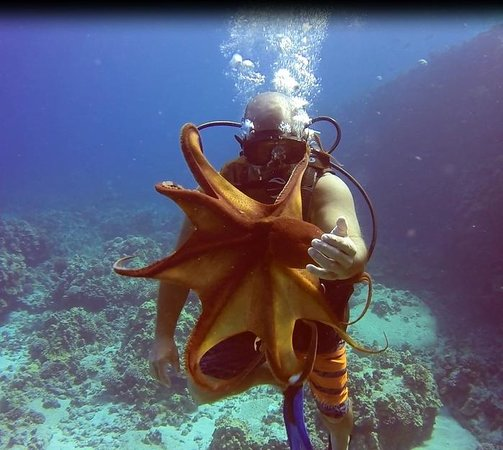 Torpedo Tours: Up close with our buddy the octopus!
