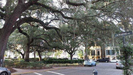 Savannah Bed & Breakfast Inn: the square across the street